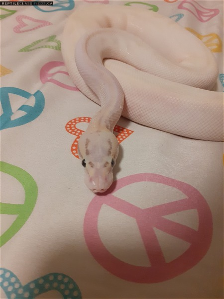 0.1 super pastel lesser highway