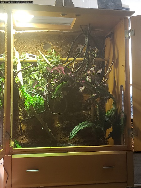 Chinese water dragon with beautiful large enclosure and pond and fogger!!!