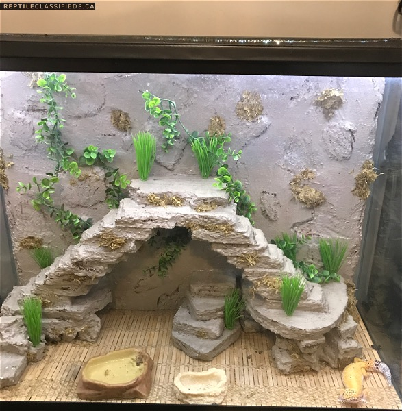 Leopard gecko, custom enclosure with led lights and remote + extras